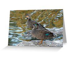 Preening Ducks Greeting Card