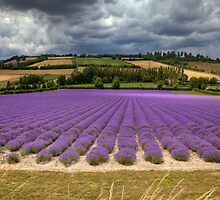 Lavender Hill ...  Shoreham Kent England by brimo