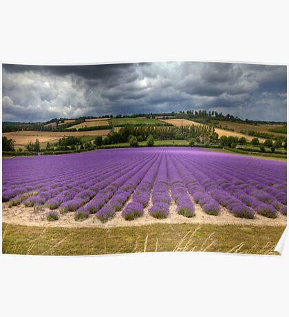 Lavender Hill ...  Shoreham Kent England Poster