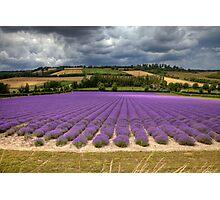 Lavender Hill ...  Shoreham Kent England Photographic Print