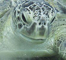 Super Green Sea Turtle by cute-wildlife