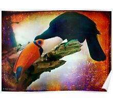 What Toucans do when no one's watching Poster