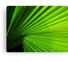 green rays Canvas Print