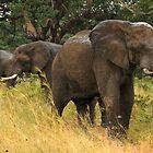 Three's company by Explorations Africa Dan MacKenzie