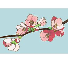 Pink on Blue Blossoms Photographic Print