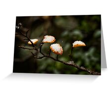 Frosty Fagus Greeting Card