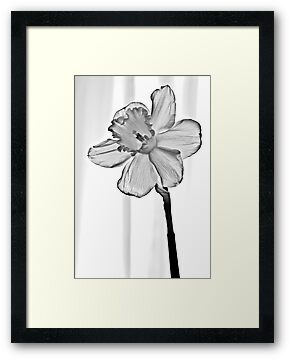 Glass Daffodil by onyonet photo studios