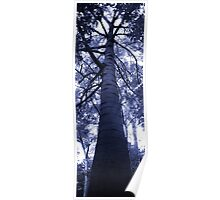 The tree trunk Poster