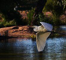 Composite Egret by Marvin Collins