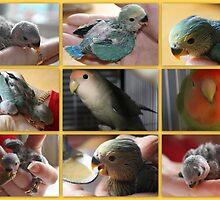 The Lovebird Family by AuntDot