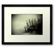 Midnight Moss Framed Print