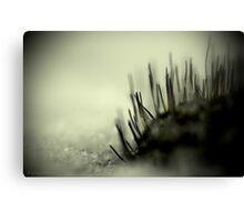 Midnight Moss Canvas Print