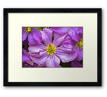 Flower and Insect Framed Print