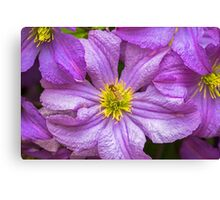 Flower and Insect Canvas Print