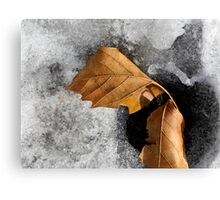 Leaf Duo on Ice Canvas Print