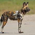 Painted Dog! by jozi1