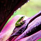 Little frog in my Garden by Jayson Gaskell