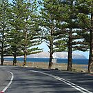 driving to Wirrina  by janfoster
