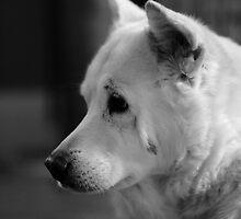 If that cat goes near my bone again, I swear ... by james smith