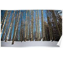 Converging Trees Poster