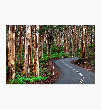 South West Australia - Boranup Forrest - Margaret River Photographic Print