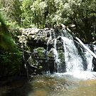 Upper Level, Lilydale Falls, Lilydale, Tasmania by RainbowWomanTas