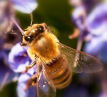 Bee. by trevorb
