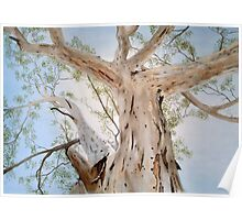 Gum Tree - Adelaide Hills South Australia Poster