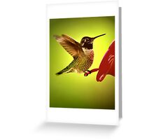 ...WINTER BIRD SERIES Greeting Card