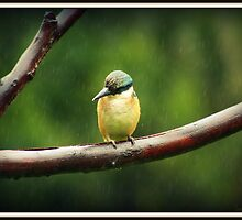 Sacred Kingfisher in the Rain by Vanessa Barklay