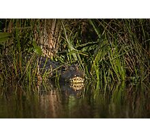 Caiman Photographic Print