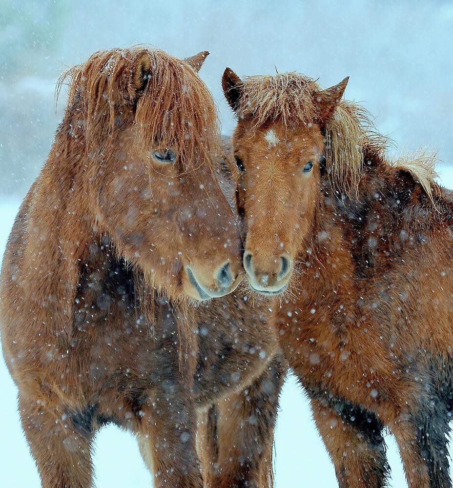 Winter affection by Alan Mattison