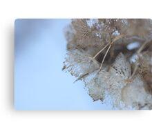 Winter Hydrangea  - JUSTART © Metal Print