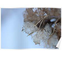 Winter Hydrangea  - JUSTART © Poster