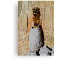 Potter Wasp Canvas Print