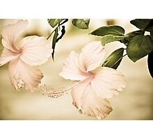 The Delicate Twin:Sold May17,2013: Explore Feb 22, 2011: Got Featured Work Photographic Print