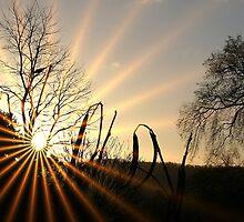 Morning Glory by John Dalkin