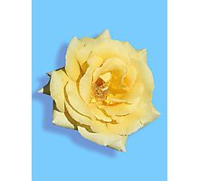 Yellow Rose on Blue Photographic Print
