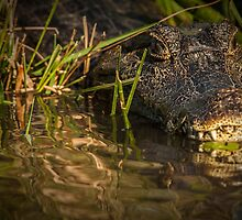 Caiman - Let's Get Closer by photograham