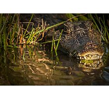 Caiman - Let's Get Closer Photographic Print
