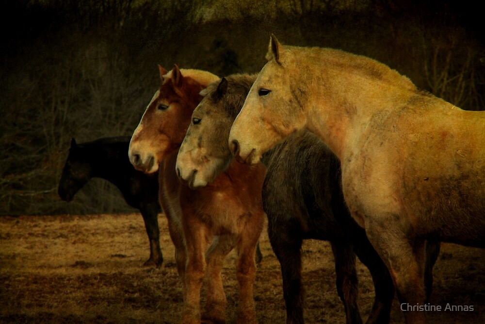 Brothers by Christine Annas