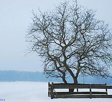Winter in Germany by FatimaFama