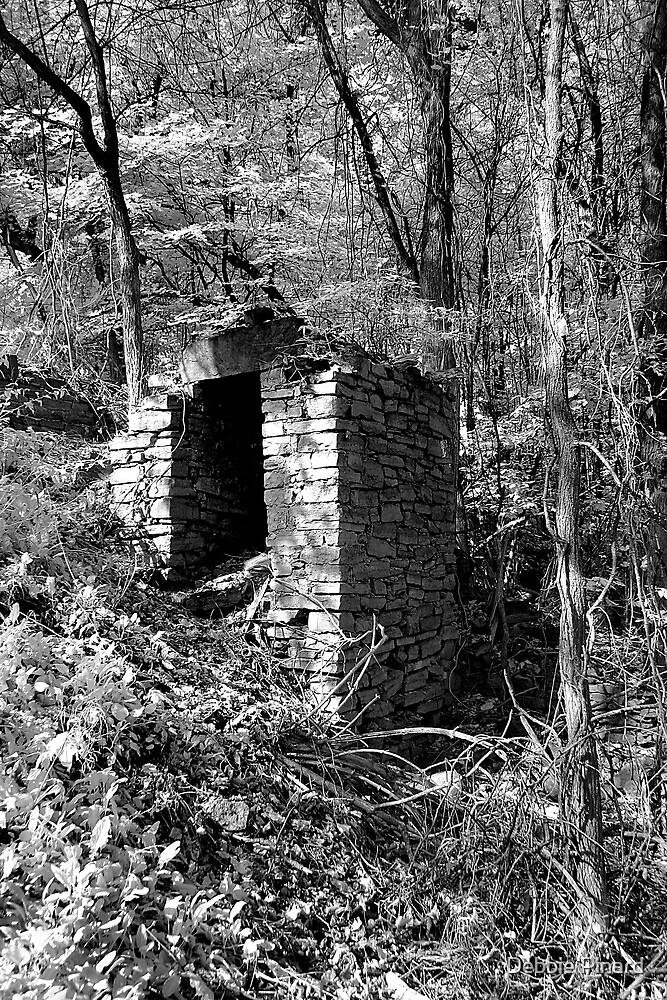 Ruin in the Woods - Dunrobin Ontario by Debbie Pinard