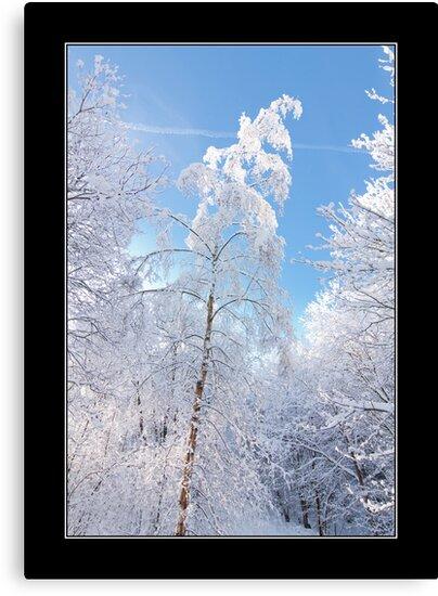 Winter Tree by Andrew Littlejohn