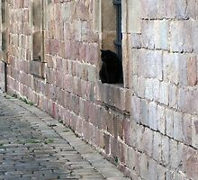 Barcelona Black Cats by Boxofwindows