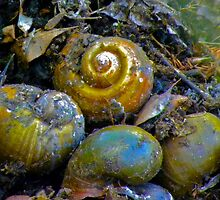 Shells in an Unexpected Place by designerbecky