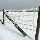 Ice Fence by RBuchhofer
