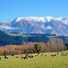 Afternoon graze by Harry Oldmeadow