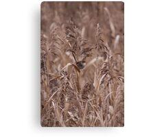Female Wren in Long Grass Canvas Print