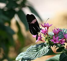 Butterfly Kisses by PhotoPosh